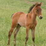 Bluebell 2011 Filly